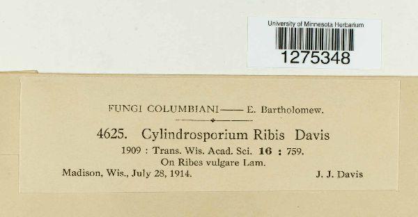 Cylindrosporium ribis image