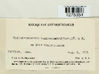 Cylindrosporium toxicodendri image