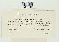 Cystotheca wrightii image