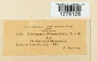 Cercospora hamamelidis image