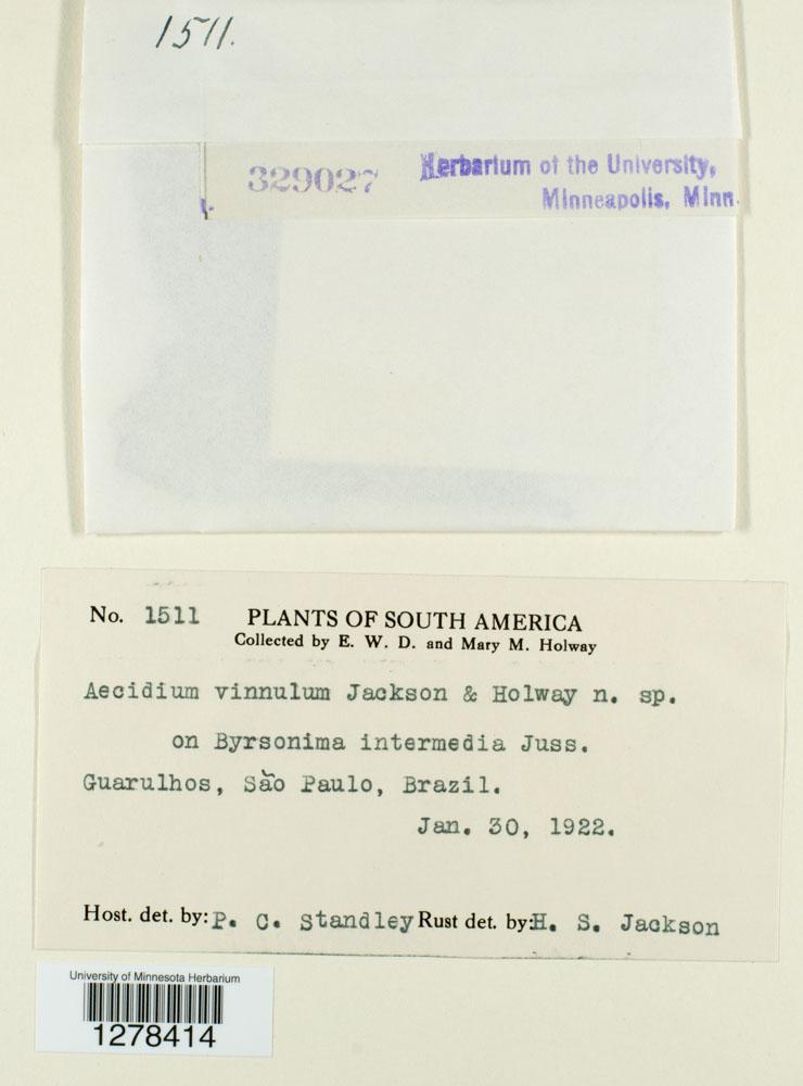 Aecidium vinnulum image