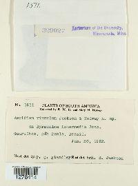 Image of Aecidium vinnulum