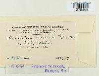 Image of Aecidium leeanum