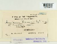 Image of Aecidium ramosii