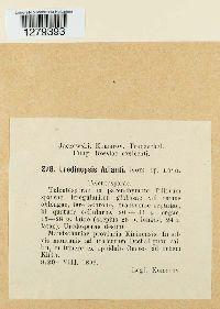 Uredinopsis adianti image