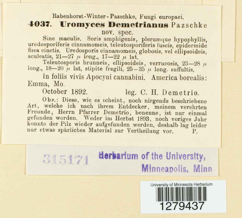 Uromyces demetrianus image