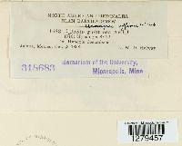 Uromyces affinis image