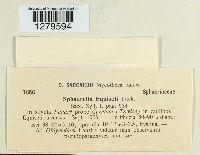Mycosphaerella equiseti image