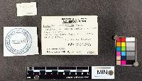 Lepiota rubrotincta image