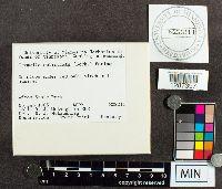 Tremella reticulata image