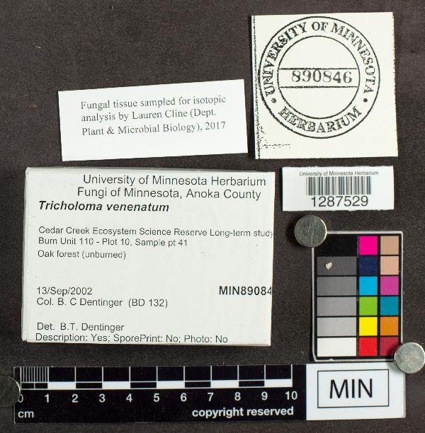Tricholoma venenatum image