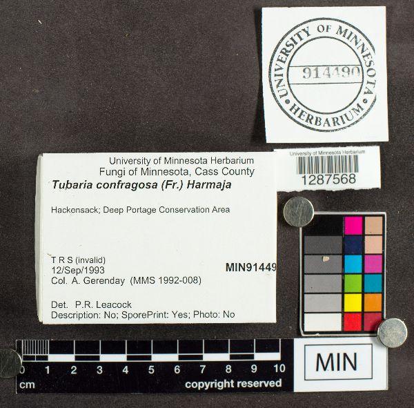 Tubaria image