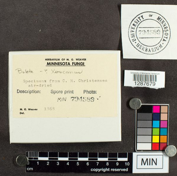 Xerocomus image