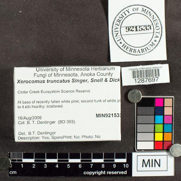 Xerocomus truncatus image