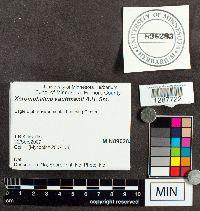 Xeromphalina kauffmanii image