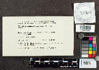 Didymium squamulosum image