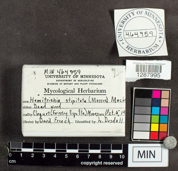 Hemitrichia image