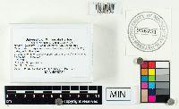 Suillus grisellus image