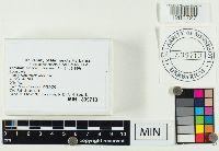 Lactarius vinaceorufescens image