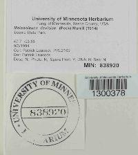 Melanoleuca davisiae image