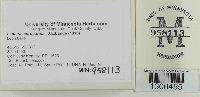 Lepiota cortinarius image