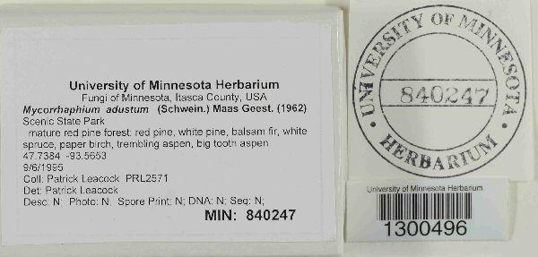 Mycorrhaphium adustum image