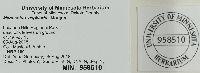 Marasmius capillaris image
