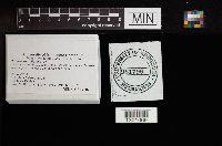 Cortinarius biformis image