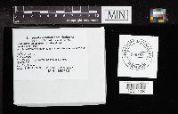 Cortinarius violaceus image