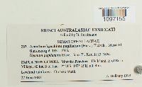 Acanthorrhynchium papillatum image