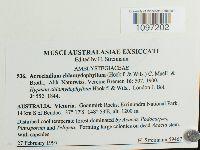 Acrocladium chlamydophyllum image
