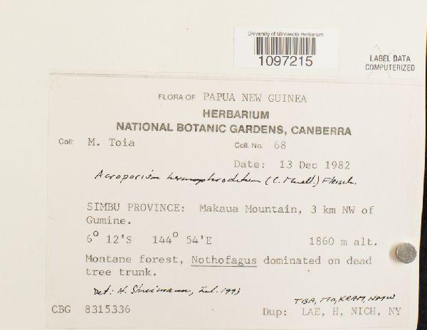 Acroporium hermaphroditum image