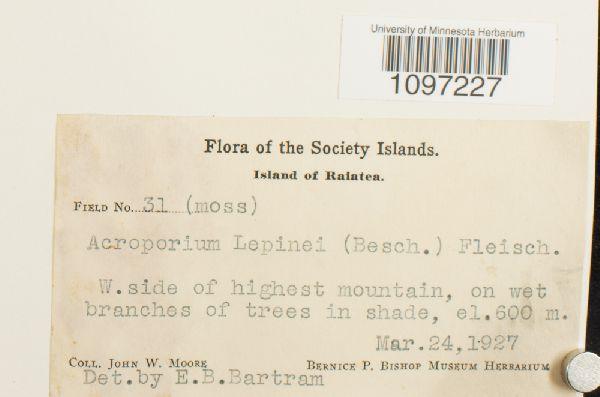 Acroporium lepinei image