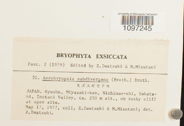 Aerobryopsis subdivergens image