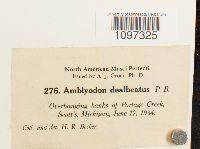 Amblyodon dealbatus image