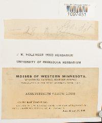 Amblystegium varium image