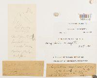 Amphidium mougeotii image