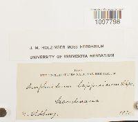 Amphidium lapponicum image