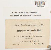 Andreaea rupestris var. rupestris image