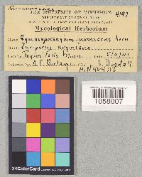 Image of Gymnosporangium nidus-avis