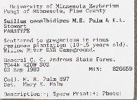 Suillus neoalbidipes image