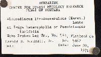 Acanthophysellum lividocoeruleum image