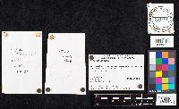 Amanita fulva image