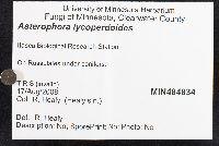 Asterophora lycoperdoides image