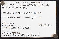 Boletus atkinsonii image