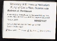 Boletus floridanus image