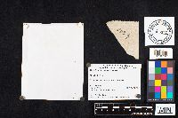 Boletus flavorubellus image