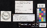 Boletus nobilissimus image