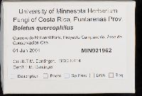 Boletus quercophilus image