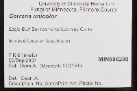 Cerrena unicolor image